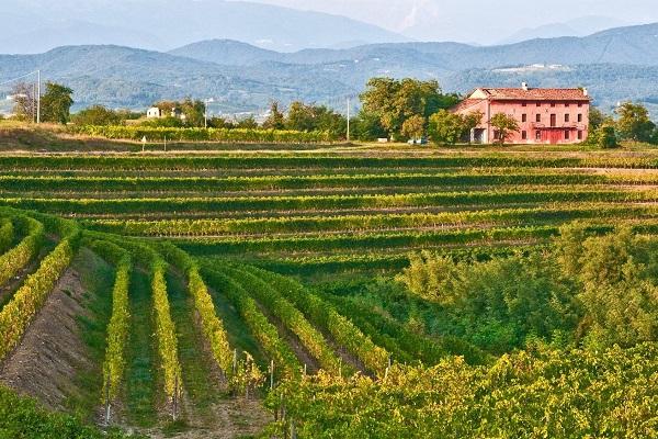 Friuli Tour a margherita